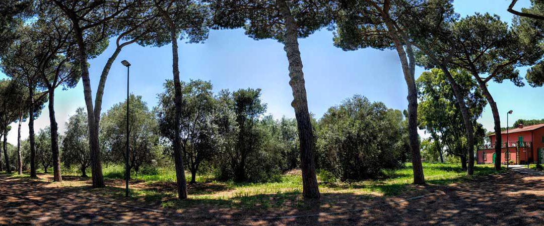 Buon solstizio d'estate… e non solo