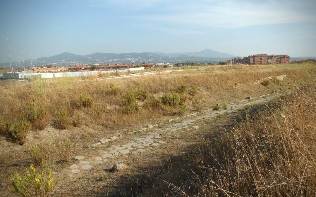 La strada Tuscolo-Fidene a Torvergata - Museo di Archeologia per Roma